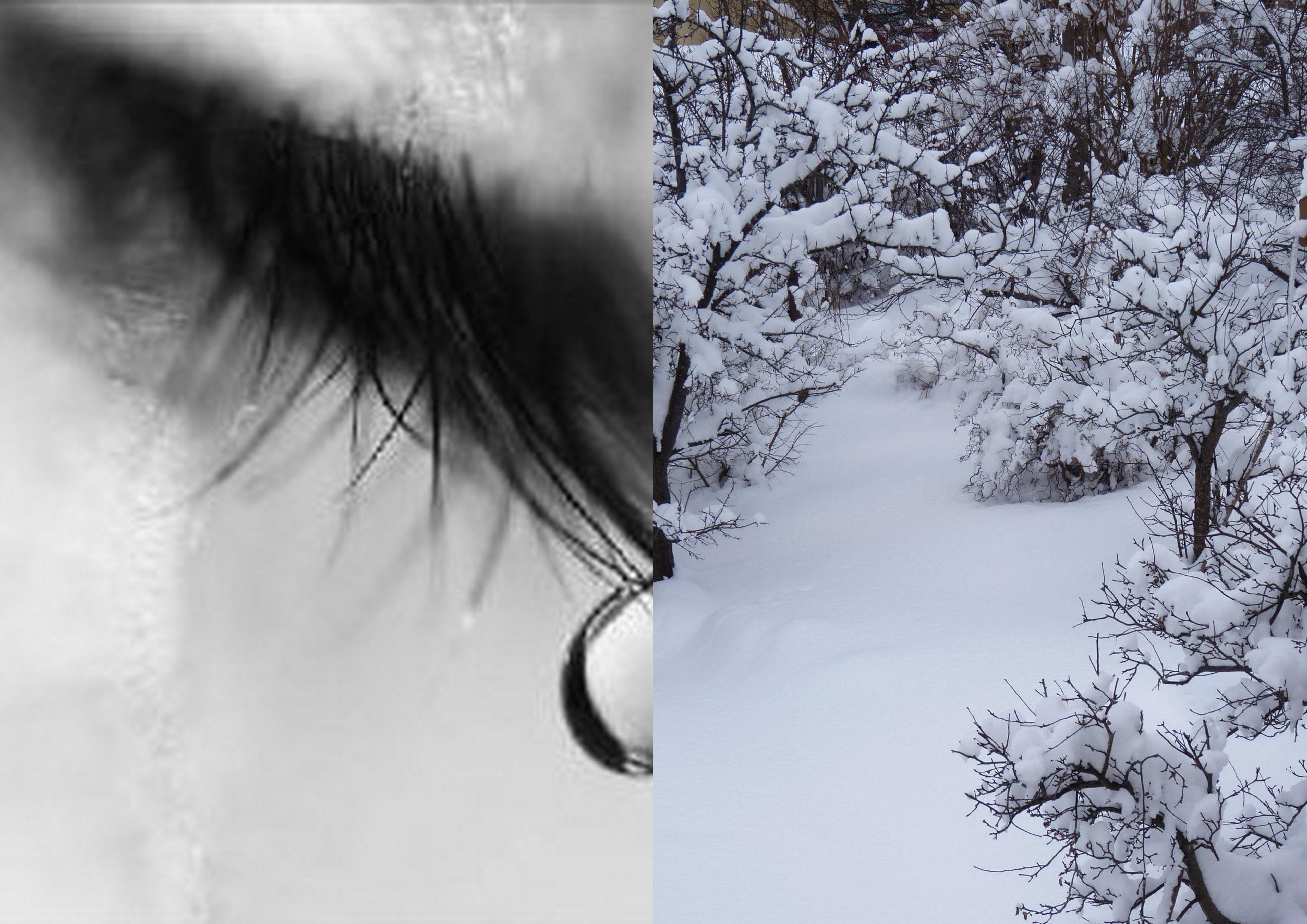 iarna2010.jpg